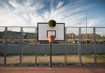 basketball-plant